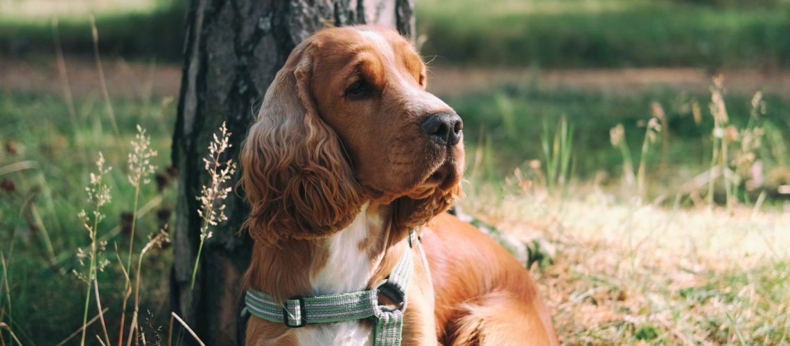 medium-coated-brown-dog-sitting-beside-tree-2904343